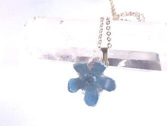 Botanical jewelry ブルースターのネックレスの画像