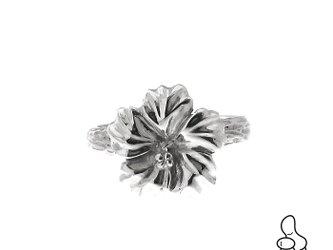 Hibiscus Ringの画像