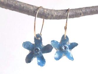 Botanical jewelry ブルースターのフープピアスの画像