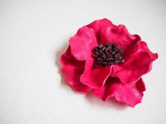アネモネのような leather flowerの画像
