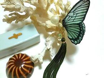 蝶のピアス (大) マダラ系の画像