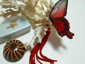 蝶のピアス (大) アゲハの画像