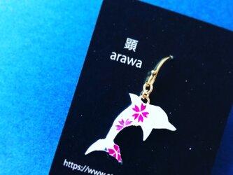 桜白イルカ【永遠に咲き誇るSakuraシリーズ】の画像