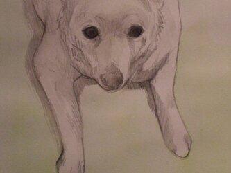 大切な方、ペット、思い出の風景など絵にしてみませんか?の画像