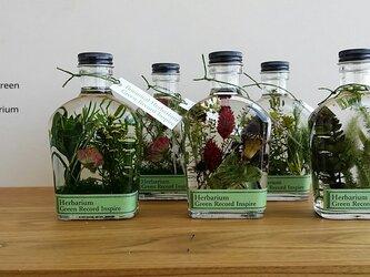 ハーバリウム・グリーンプランツの草花景色4♬の画像
