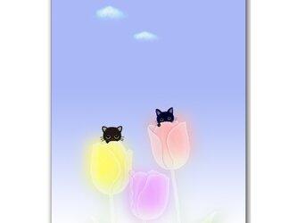 「キモチいいにゃん^^」 ほっこり癒しのイラストポストカード2枚組No.744の画像