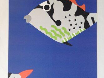 A3サイズポスタ− きへりもんがら幼魚  (フレ−ムなし)の画像