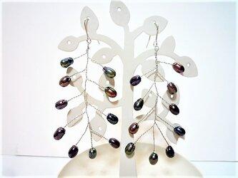 ブラック淡水真珠ロング揺れる小枝ステンレス製ピアス&イヤリングの画像