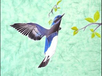 新緑と青い鳥(オオルリ)の画像