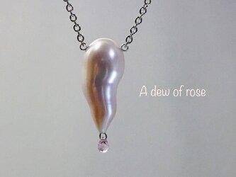 A dew of rose(バラのしずく)の画像