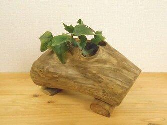 【温泉流木】おしゃれな口をあけた流木のミニプランター 流木インテリアの画像