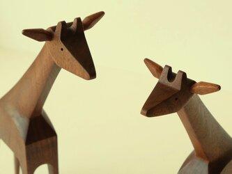 キリンさんのカップル ( ウォールナットジラフ×2)の画像