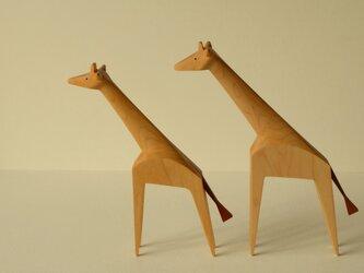 キリンさんのカップル ( メープルジラフ ×2)の画像