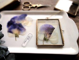 植物標本 ■押し花フレーム ガーランド■Square スイトピー 式部の画像