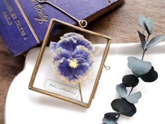 植物標本 ■押し花フレーム ガーランド■Square パンジー パープル ホワイトフリルの画像