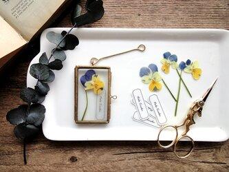 植物標本 ■押し花フレーム ガーランド■Short Slim 三色スミレの画像
