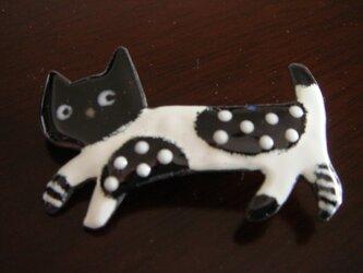 七宝 お洒落な猫ちゃんの画像
