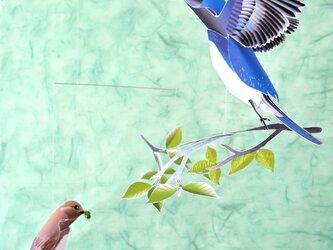 新緑と青い鳥たち(オオルリ)の画像