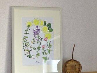 A4ポスター Herbsの画像