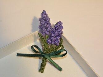 ラベンダー・濃紫の画像