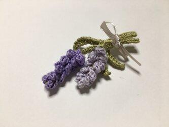 ラベンダー・薄紫の画像