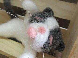 ぐうたらキジシロ猫ちゃんの画像