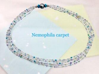 Nemophila carpet(ネモフィラカーペット)の画像