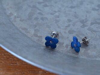藍染花ピアスの画像
