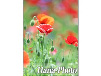 1349) 可憐な野の花たち ポストカード5枚組の画像