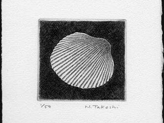 貝殻・G / 銅版画 (作品のみ)の画像