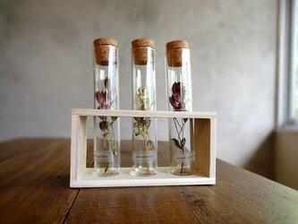 植物標本 Botanical Collection■フレームボックス入りガラス管■アストランチア 3品種セットの画像