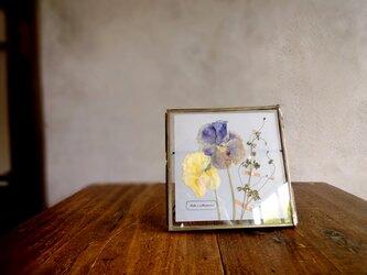 植物標本 ■押し花フレーム■パンジーとオニタラビコ Aの画像