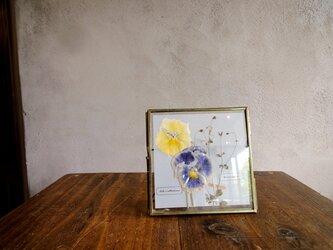植物標本 ■押し花フレーム■パンジーとオニタラビコ Bの画像