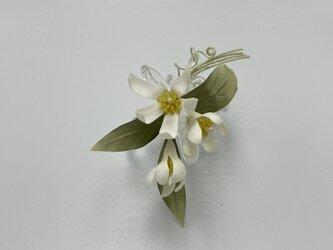 布bana✾オレンジの花の画像