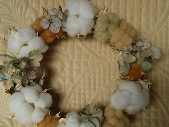 sale  綿花の種  『白・茶・緑』セットの画像