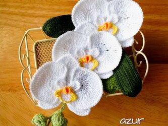 胡蝶蘭のコサージュ・白の画像
