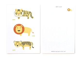 ねこ科の3匹(ポストカード3枚セット)の画像