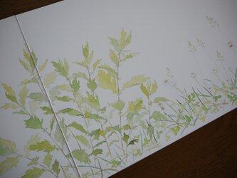 春夏草図の画像