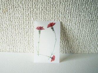 カーネーションのカードの画像