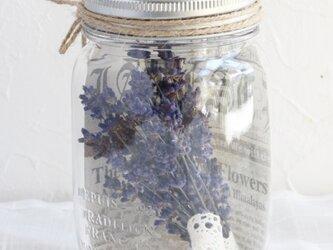 Bottle flower(早咲きラベンダー)の画像