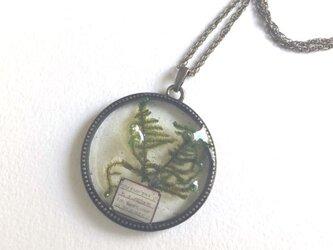 植物標本 ハイゴケ ペンダント Lの画像