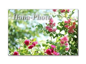 1353)バラのある風景  ポストカード5枚組の画像