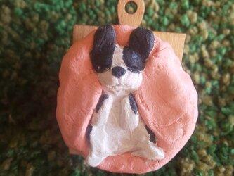 ヘソてん犬のマグネットクリップ(ボストンテリア)の画像