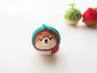 【受注製作】なりきりスイカのまゆ柴犬(赤柴・黒柴・白柴)  羊毛フェルトの画像
