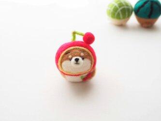 なりきりさくらんぼのまゆ柴犬(赤柴・黒柴・白柴)  羊毛フェルト(アクレーヌ)※受注製作の画像