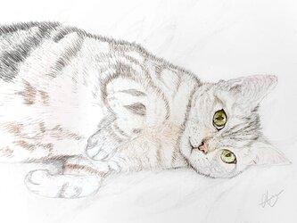 カンパニュラ 猫のポストカードの画像