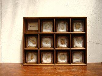 微小貝類化石標本その二。の画像