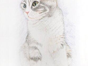ラベンダー 猫のポストカードの画像