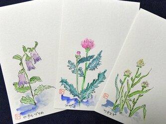 水彩ポストカード~花シリーズA~3枚セットの画像