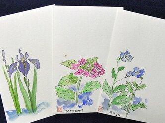 水彩ポストカード~花シリーズB~3枚セットの画像